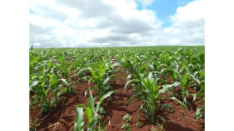 Africa's agri challenges