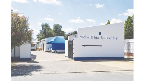 Welwitchia struggles with land in Windhoek