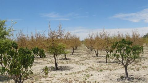 State orchards left to die