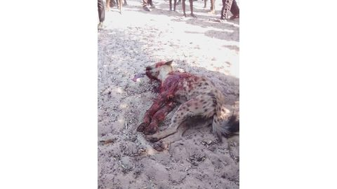 Hyena killed after chasing residents