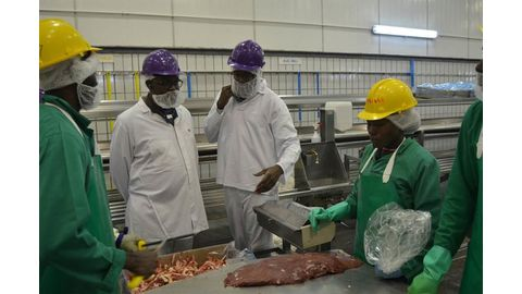 Commercial slaughtering plummets by 45%