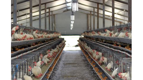 Poultry import ban lifted