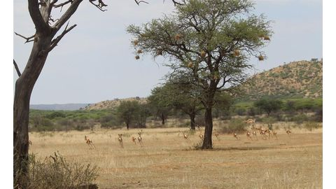 Conservation costs up 12-fold