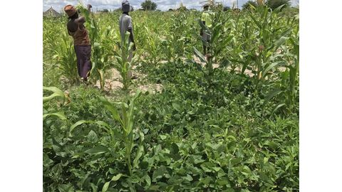 Crop losses of 50% due to climate change