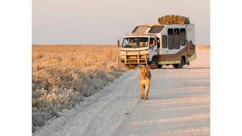 Have an adventure with Wild Dog Safaris