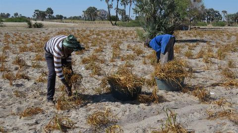 Low earners excluded from drought relief