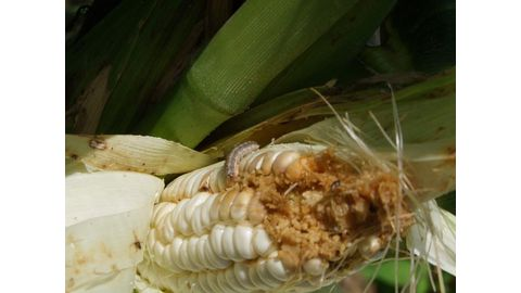 Slow start for crop producers