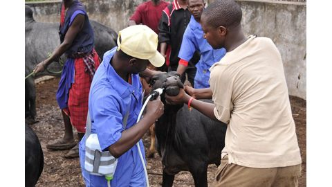 Animal welfare critical to agriculture