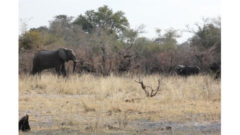 Unethical hunting has no place in Namibia
