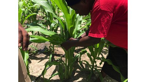 Local harvests at risk
