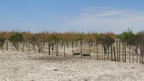 Dying orchards disturb SPYL