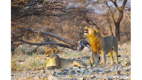 Wildlife conflict becoming more severe