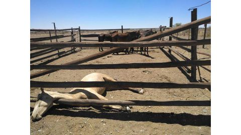 Horse theft and cruelty probe continues