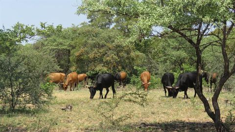 Communal farmers called to register
