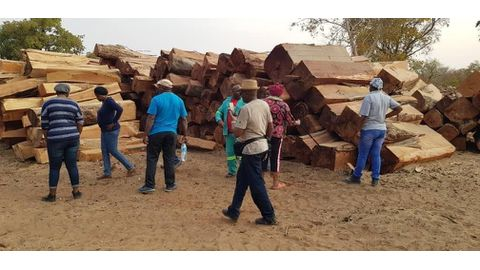 MPs get mixed reports on logging