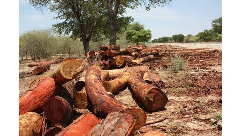 Moratorium on timber transport lifted