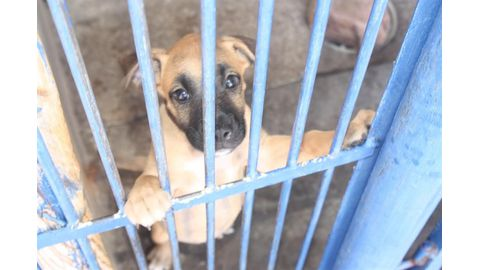Unwanted pets need homes