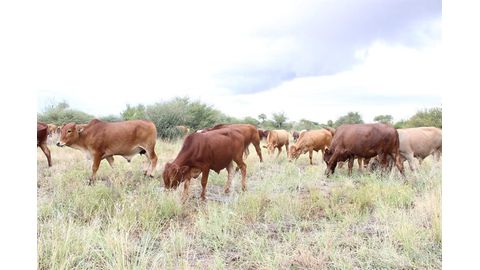 Studies to guide livestock policies