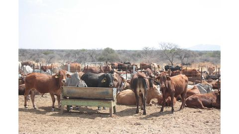 Business, not cattle numbers key - Endjala