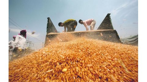 World food prices rise in January