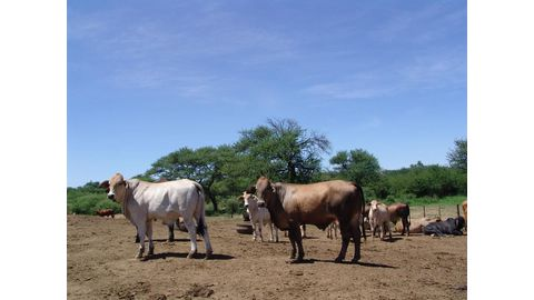 Livestock industry in crisis