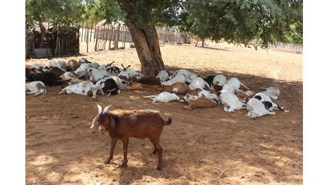 Stock theft in spotlight