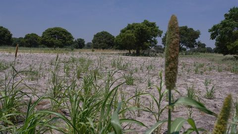 Fears of drought escalate