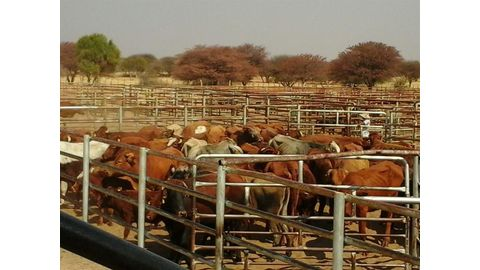 Borders closed due to FMD outbreak in SA