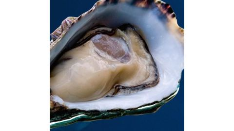 Oysters and mussels are unsafe