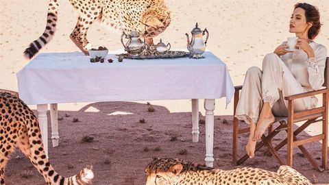 Angelina Jolie poses with cheetahs in Namibia