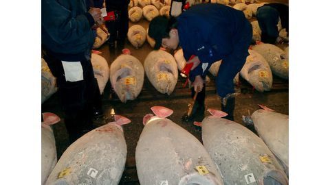 Record tuna auction in Japan