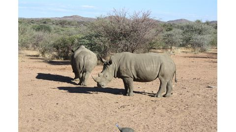 SA opposes online rhino horn auction