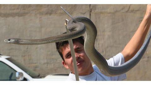 'Snakes won't chase you'