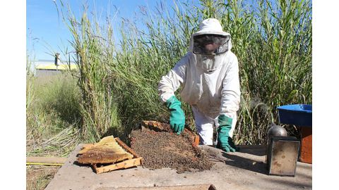 Four colonies of bees stolen