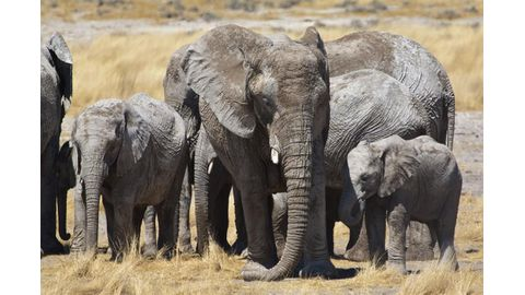 Chinese fund raises thousands for wildlife