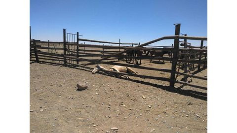 Horse-theft case heats up