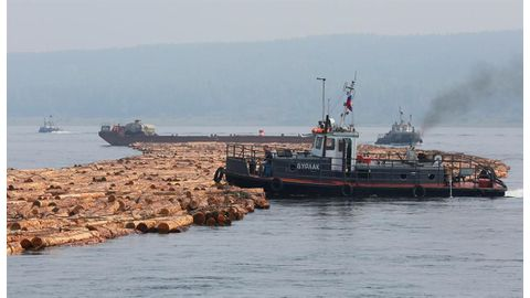Russia warns China over illegal logging