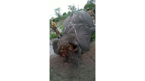 Four poachers killed since December