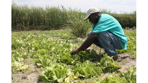 N$109m for 44 000 farmers