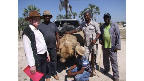 Another lion killed in the North