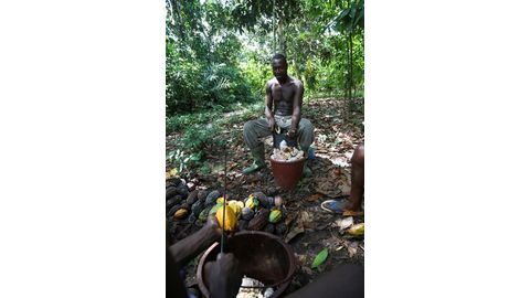 New cocoa deals help peasant farmers, but not enough