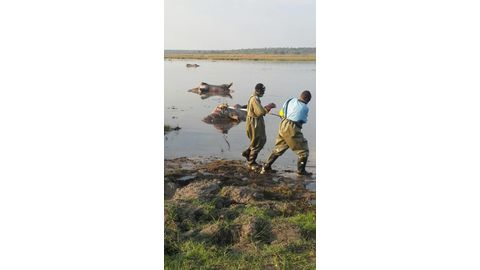 Anthrax outbreak in Sesfontein area