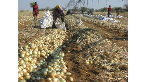 Farmworkers at risk of layoffs