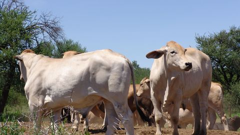 South Africa drops livestock restrictions