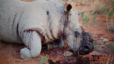 Four rhinos butchered at Gobabis