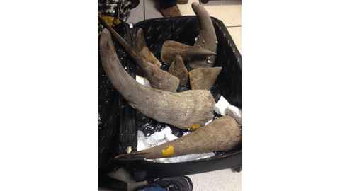 18 horns received in Windhoek