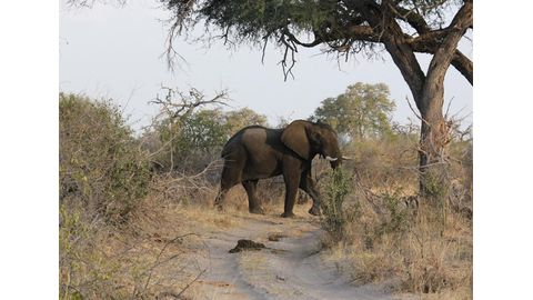 Geingob supports legal ivory trade