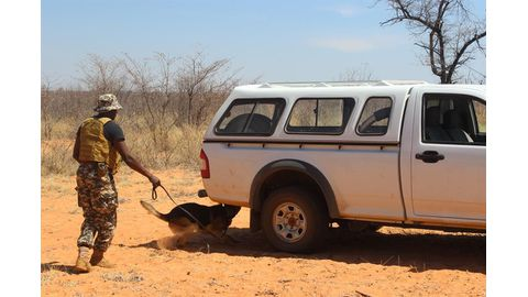 Dogs on the trail of poachers