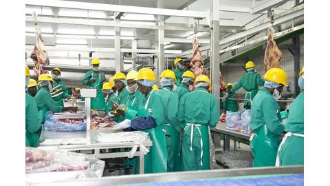 Meatco sheds 234 jobs