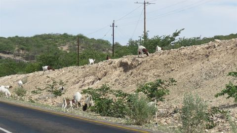 People, animals go hungry in Kunene